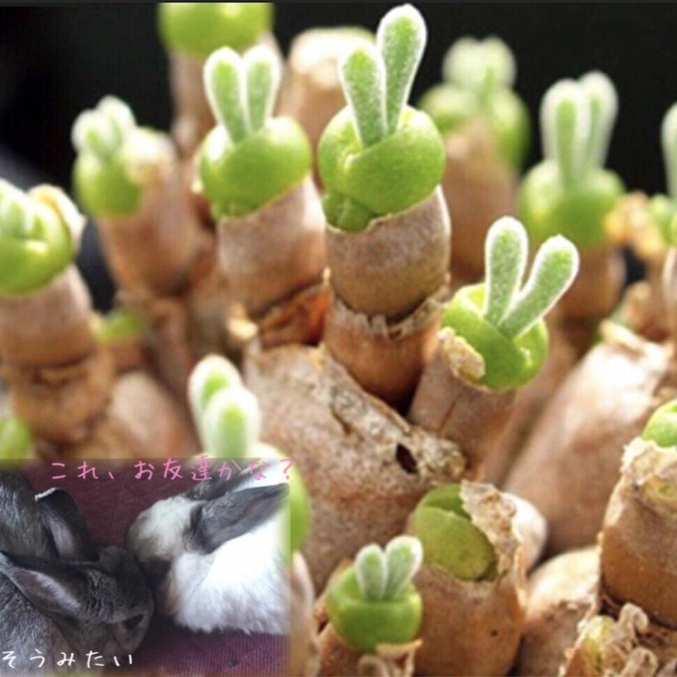 植物 方 多肉 育て