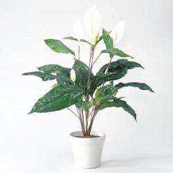 人工植物 【スパティラム】75cm GS-124