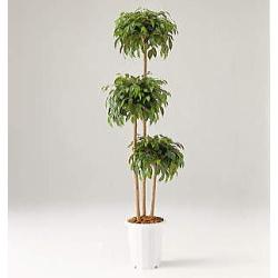 【メーカー直送 代引不可】人工植物 【ベンジャミントヒアリートリプル】 180cm GB-224