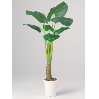 【メーカー直送 代引不可】人工植物 【クワズイモ】 150cm AS-KI15