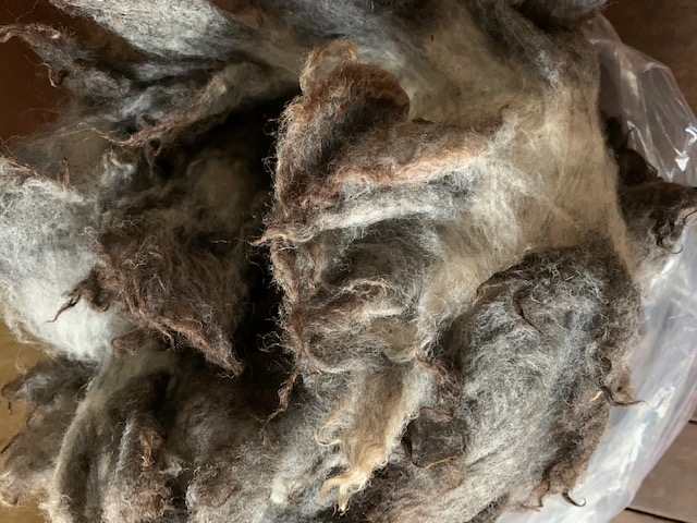 グリージーウール・シェットランド 白/黒ミックス1.65kg【紡毛 紡ぎ 手織り 織機 染め 羊毛 フェルト ニードル 糸 綿 ウール 絹】