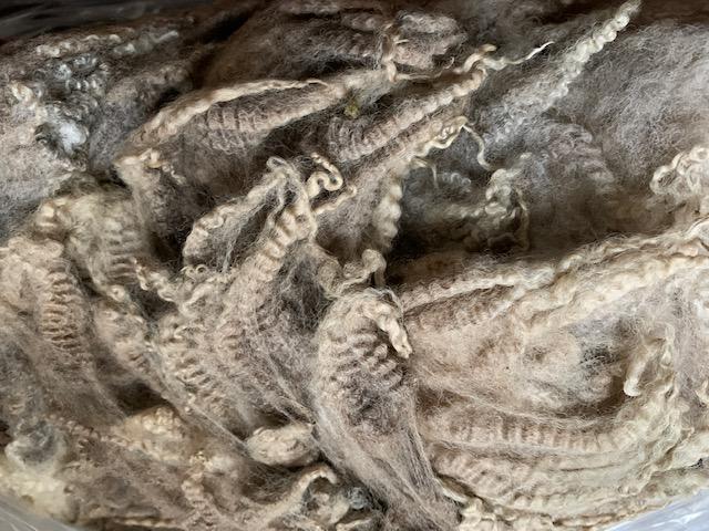 グリージーウール・シェットランド ベージュ1.45kg【紡毛 紡ぎ 手織り 織機 染め 羊毛 フェルト ニードル 糸 綿 ウール 絹】