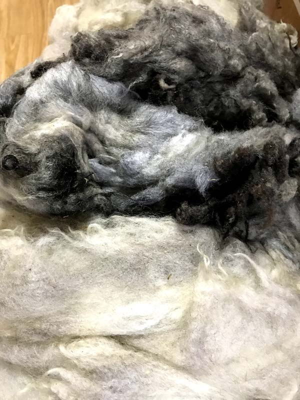 グリージーウール・シェットランド ライトグレー系1.7kg【紡毛 紡ぎ 手織り 織機 染め 羊毛 フェルト ニードル 糸 綿 ウール 絹】