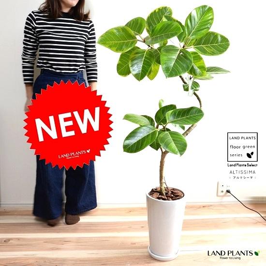 アルテシーマ 3Dカーブ (曲がり) 白色 トール 陶器鉢 (スリム型) 鉢植え 大型 斑入り ゴム ゴムの木 葉模様 白 ホワイト 丸 観葉植物 丸い葉 送料無料