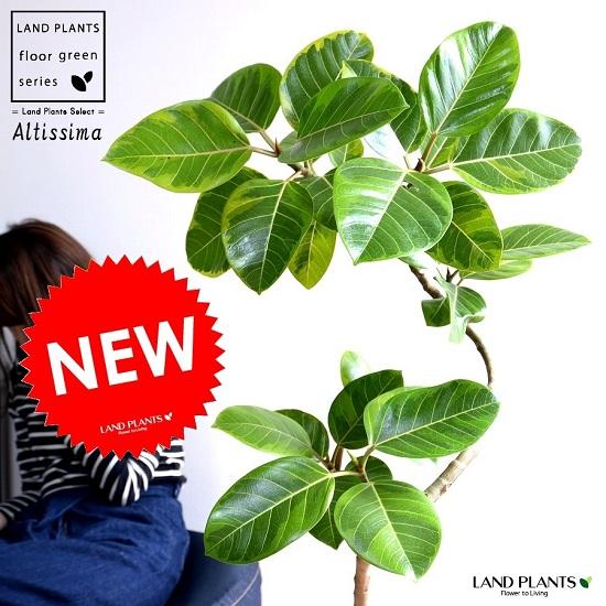 アルテシーマ 3Dカーブ (曲がり) 茶色 エッグラウンド 陶器鉢 鉢植え 大型 斑入り ゴム ゴムの木 葉模様 茶 ブラウン ベージュ 丸 観葉植物 丸い葉 送料無料