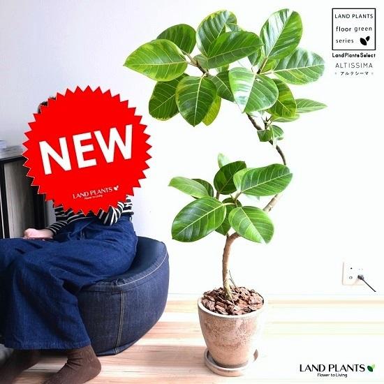 アルテシーマ 3Dカーブ (曲がり) エッグ型 ラウンド 陶器鉢 (茶色) 鉢植え 大型 斑入り ゴム ゴムの木 葉模様 茶 ブラウン ベージュ 丸 観葉植物 丸い葉 送料無料