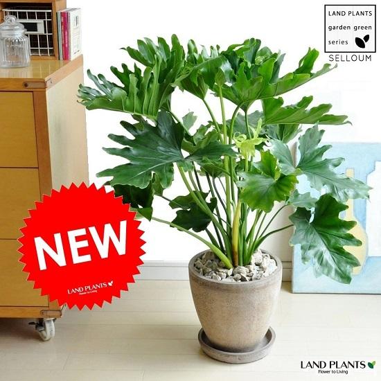 セローム 茶色 エッグ型 ラウンド 陶器鉢 フィロデンドロン サトイモ 手のひら型の葉っぱ 敬老の日 ポイント消化 観葉植物