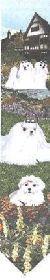 ゴブラン織り壁掛け【マルチーズ】・ベルプル【送料無料】 インテリア  プレゼント ギフト 犬 ルシアン