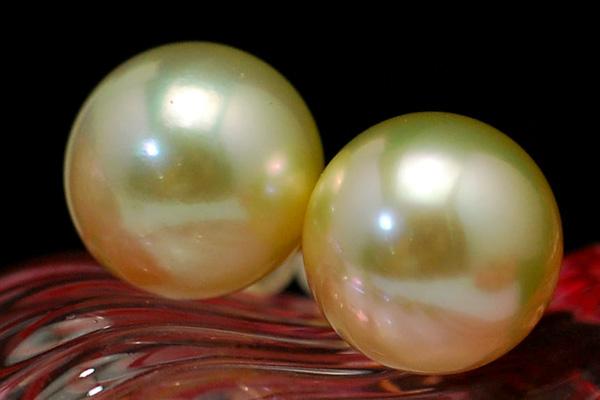 12mmシャンパンゴールド白蝶真珠ピアス/イヤリング ふんわり優しいカラーに深みのあるてり 上質シャンパンゴールドの迫力大珠!