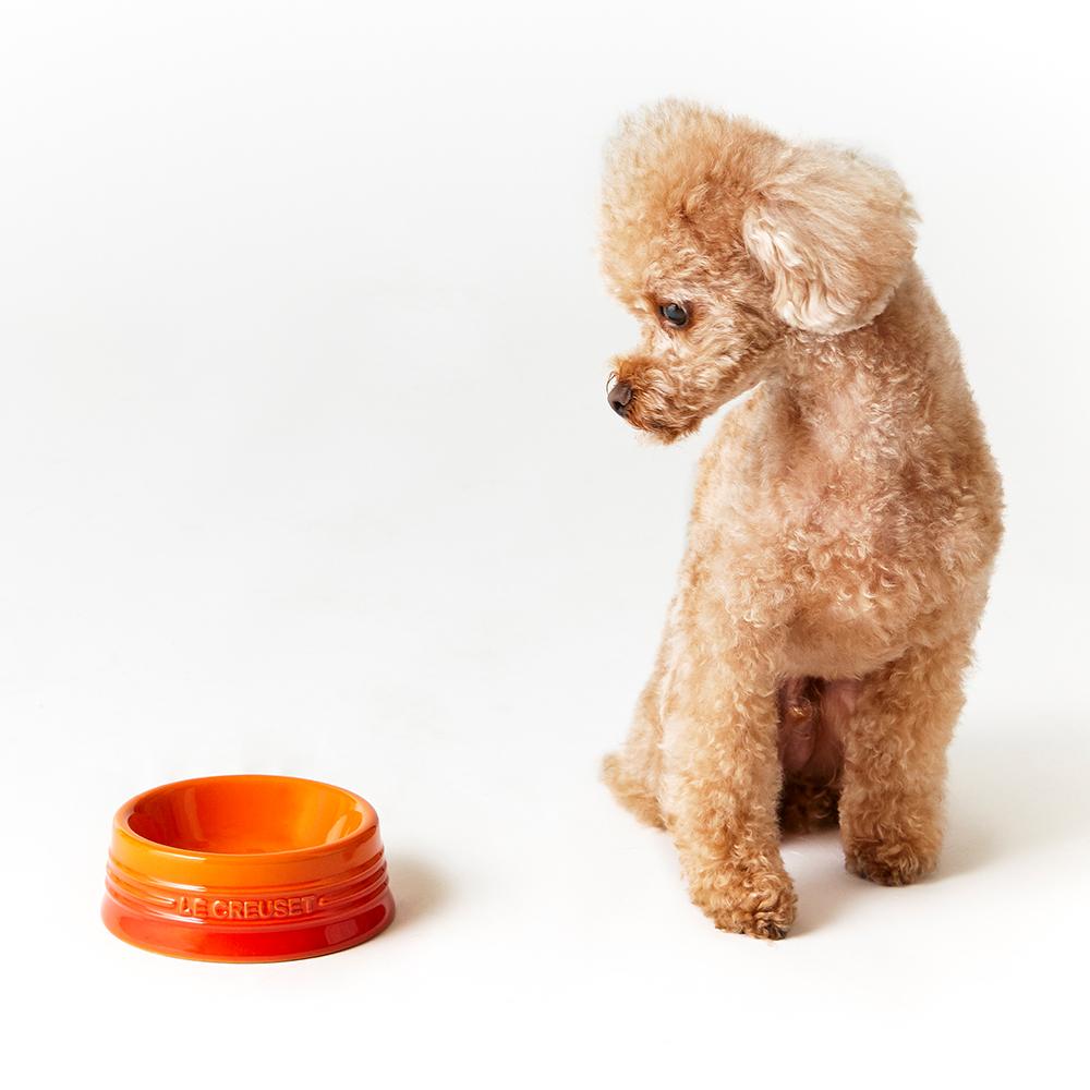 Le creuset dog bowl