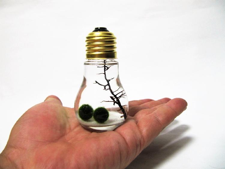 小さな電球まりも