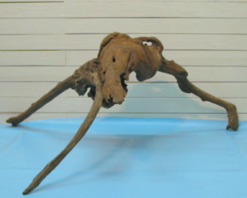大型変形流木根 h193 DIYガーデニング園芸工作爬虫類用インテリア店舗ディスプレイや撮影用に 、そのまま使えるきれいに処理された流木素材 【送料無料】