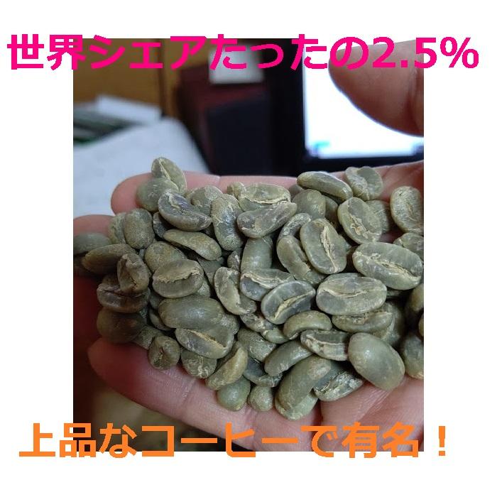焙煎人珈琲豆也のニカラグアマラゴジッペ100g【粉】(コーヒーメーカー/ドリップ向き中細挽き)