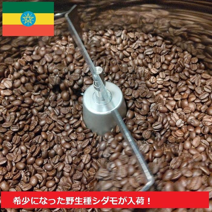 爆買い新作 希少な野生のコーヒーが入荷 \送料無料 メール便 希少品種 野生種エチオピアシダモ200グラム 即納最大半額 珈琲豆 コーヒー豆 焙煎人珈琲豆也 コーヒーマニア