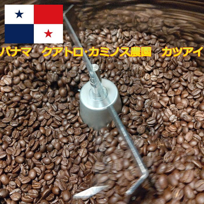スペシャルティコーヒーの有名産地パナマコーヒーが入荷! \全国送料無料 メール便発送/【スペシャルティコーヒー パナマ産クアトロ カミノス農園 カツアイ200グラム】コーヒー豆 豆でも粉でも可