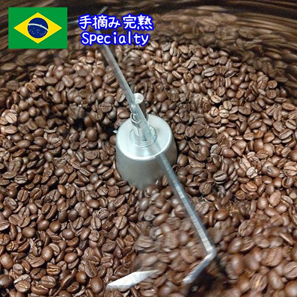 質の良いブラジル産スペシャルティコーヒー豆 コーヒー コーヒー豆 1kg 手摘み完熟コーヒー豆1000グラム 再入荷/予約販売! 1キロ セラード地域 安値 珈琲豆 スペシャリティ コーヒー粉 ブラジルコーヒー