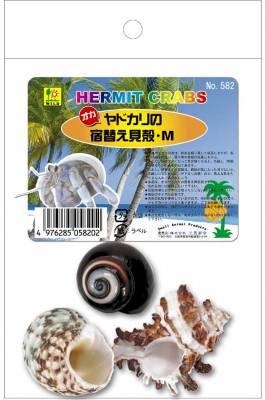 オカヤドカリ用 宿替え貝殻Mサイズ 三晃商会 商品追加値下げ在庫復活 お買い得 M オカヤドカリの宿替え貝殻