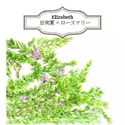 エリザベス(日向夏×ローズマリーカンファー)ブレンド精油