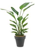 ストレリチア10号特殊鉢観葉植物 インテリア 観葉植物インテリア ストレリチア 観葉植物 送料無料 人気の観葉植物 おしゃれ観葉植物 お部屋観葉植物