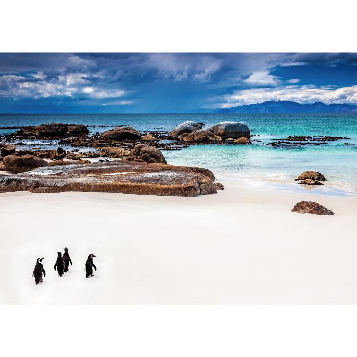 お風呂ポスター 海へ向かうペンギン B1(103×72.8cm) 長期固定タイプ(吸着素材)