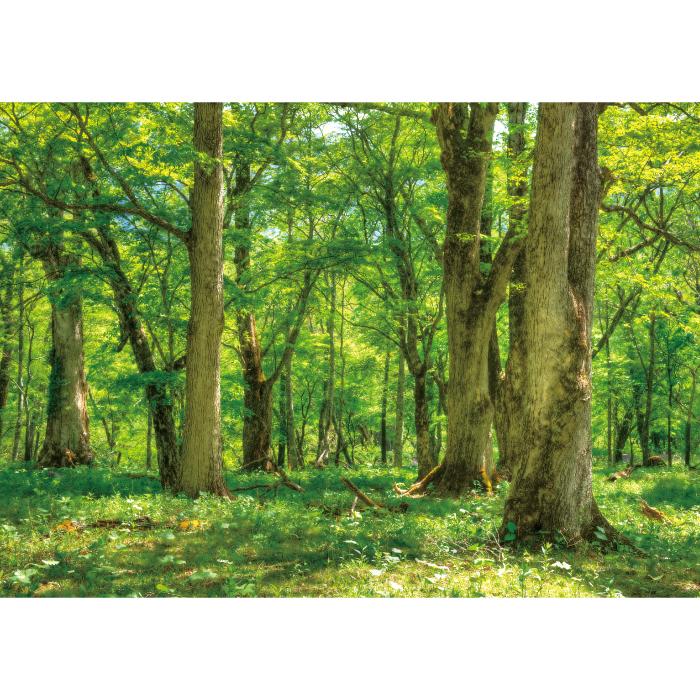 お風呂ポスター 春の森 B1(103×72.8cm) 長期固定タイプ(吸着素材)