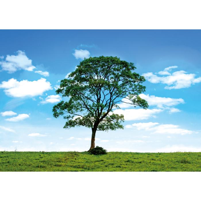 お風呂ポスター 天と地と木 B1(103×72.8cm) 長期固定タイプ(吸着素材)
