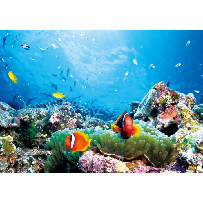 お風呂ポスター 海の中のパラダイス B1(103×72.8cm) 長期固定タイプ(吸着素材)