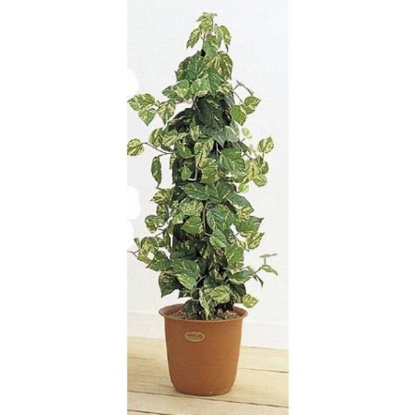 人工観葉植物 ピュアメイト ポトスポール 150cm 送料無料( 光触媒 消臭 インテリア 大型 )