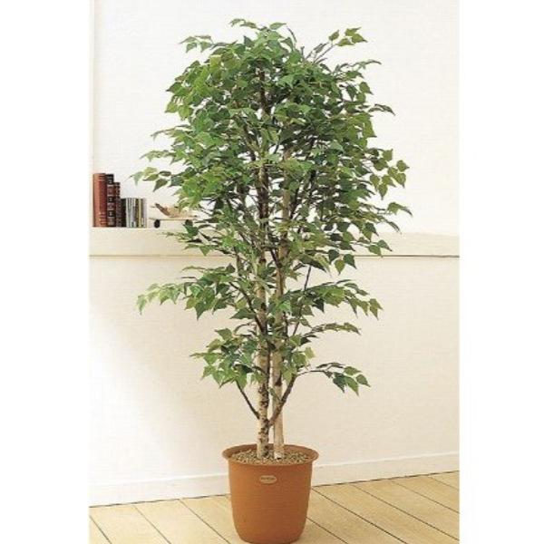 人工観葉植物 ピュアメイト 白樺 180cm 送料無料( 光触媒 消臭 インテリア 大型 )