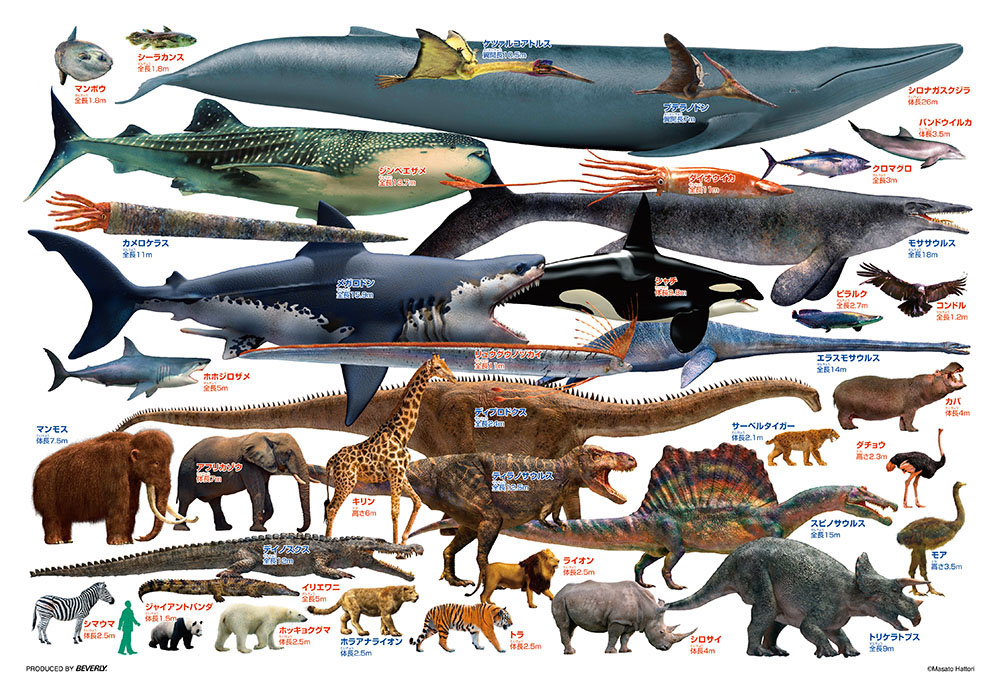 ジグソーパズル 市場 80Pジグソーパズル 巨大生物くらべてみよう 38×26cm 贈呈 ビバリー 80-028