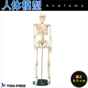(人体模型)骨格模型高さ85Cmの省スペースタイプ!【smtb-s】