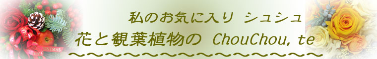 花と観葉植物のChouchou,te:観葉植物や生花アレンジメント・花束などフラワーギフトをお届けします