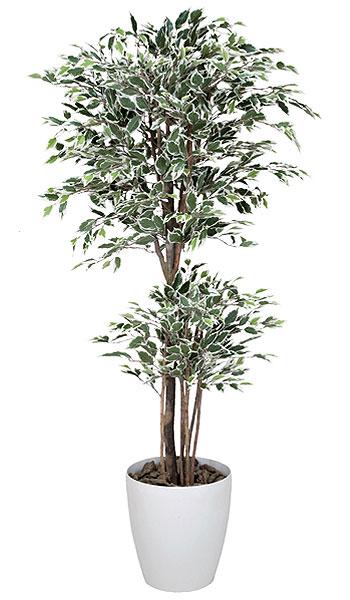 【 法人 送料無料 】ベンジャミン 観葉植物 180cm 人工木 光触媒 C3814-360
