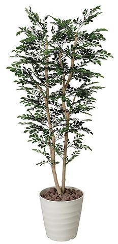 送料無料 トネリコ オフィス 光触媒 観葉植物 木 EE3401-420