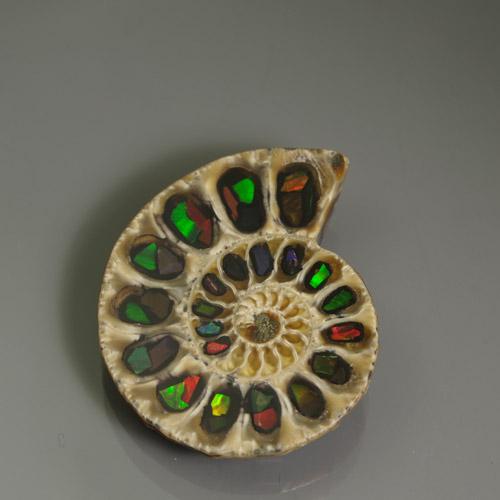 アンモナイト+アンモライト Bf-1579R 化石との融合 虹色 ジュエリー素材 天然石 化石