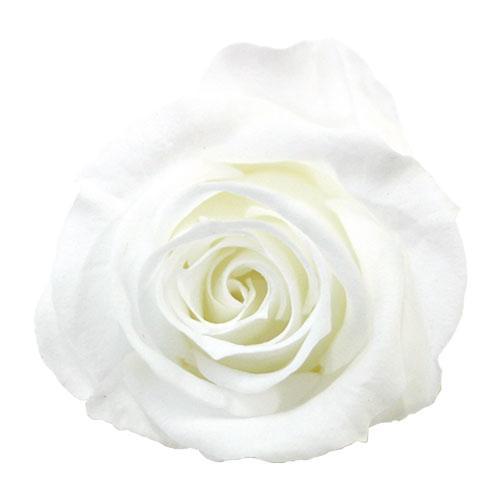 verdissimo ヴェルディッシモ バルク ミニローズ ホワイト 58901