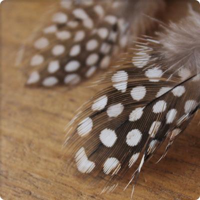 珍珠鸡羽毛部分 6 套 3 至 10 厘米的手做/DIY 材料材料叶片零件
