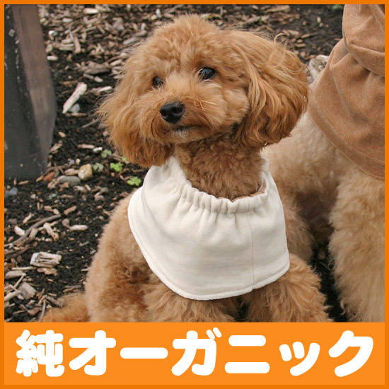 For dogs L size pure organic cotton 100%