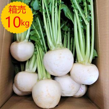 【送料無料】【九州産】箱売 かぶ(カブ)1箱(10kg)