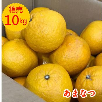 〈送料無料〉【九州産】箱売 甘夏(あまなつ)1箱 10kg