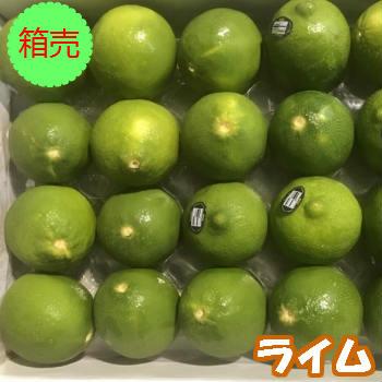 【送料無料】箱売 ライム 1箱(20玉程)