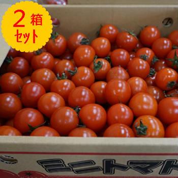 【送料無料】箱売 ミニトマト 1箱3kgを2箱セット!