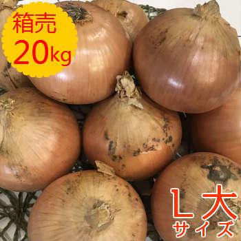 【送料無料!】箱売 たまねぎ(玉ねぎ・タマネギ・玉葱) L大玉 1箱(20kg)