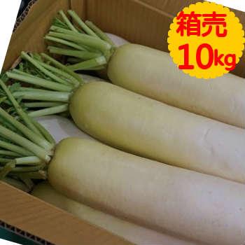 ★10%OFF!!★【送料無料】箱売 大根(だいこん・ダイコン)1箱(10kg)