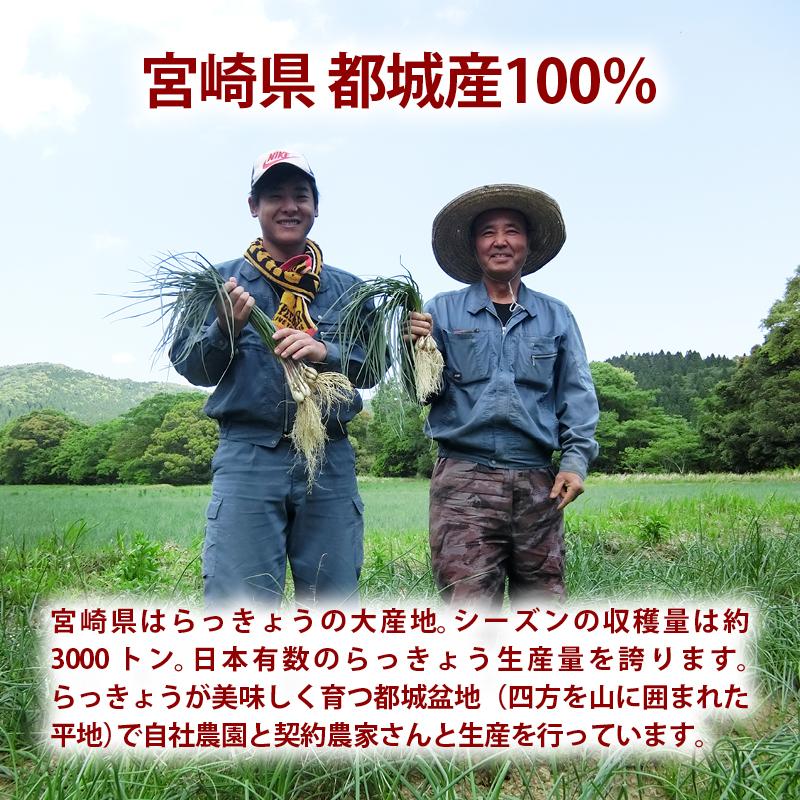 プレミアム 国産 らっきょう 宮崎県産 甘酢 らっきょう 600g(150g×4) 蜂蜜入り 着色料無添加 保存料不使用 カレー チャーハン おつまみ に