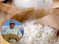 美しい水と有機肥料で育てたリピーターさん続出の絶品米! これぞ新潟米!リピーター続出!【新潟産コシヒカリ 玄米25kg】<あす楽・即日発送>