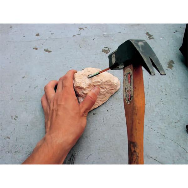 簡単に化石採掘体験 化石採掘 新作多数 ※アウトレット品 ネズミサメの歯