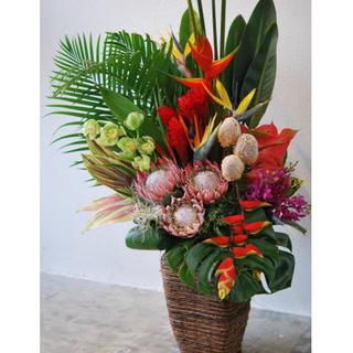 おまかせ!ハワイアンバスケットフラワーアレンジ30000 花 ギフト 誕生日 送料無料 アレンジメント フラワー ギフト お花 お祝い 開店祝い アレンジ あす楽 退職祝い 母 プレゼント