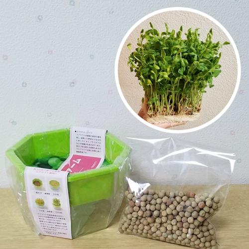 とてもお役立ちのスプラウト! 豆苗のタネ 栽培セット 栽培容器とタネ約100ml これで発芽3~4回分、収穫後も再発芽するから6回以上は収穫出来ます 第4種郵便限定で全国送料無料!野菜 種 ミニ野菜 スターターセット