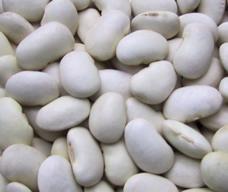 事業所配送 個人宅不可 白花豆 ※アウトレット品 北海道産 格安 25kg